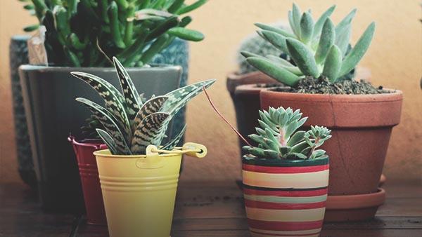 sobno-bilje-vrtni-centar-iva5