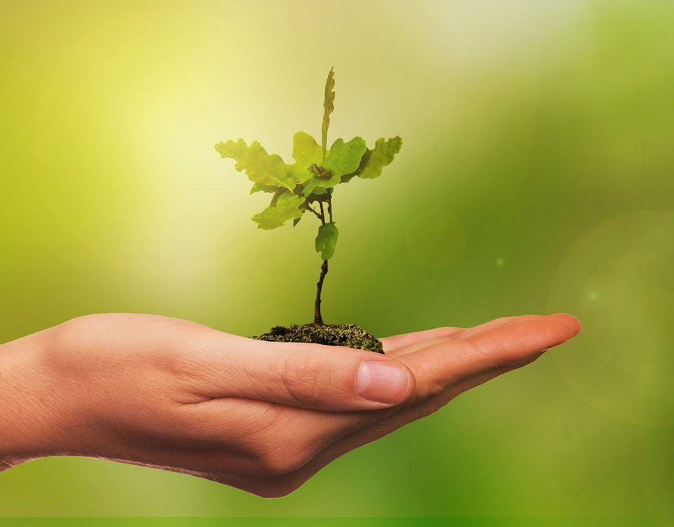 Savjeti za sadnju ukrasnog drveća