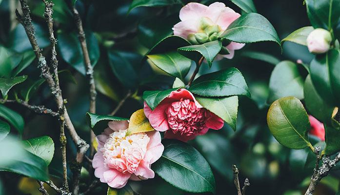 vrtnicentariva_vanjsko_cvijece_3