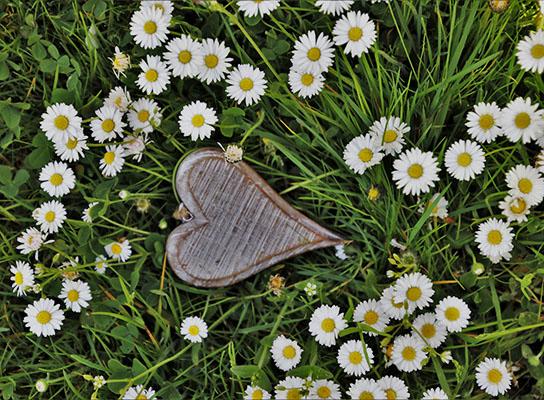 vrtnicentariva_vrt_i_travnjak