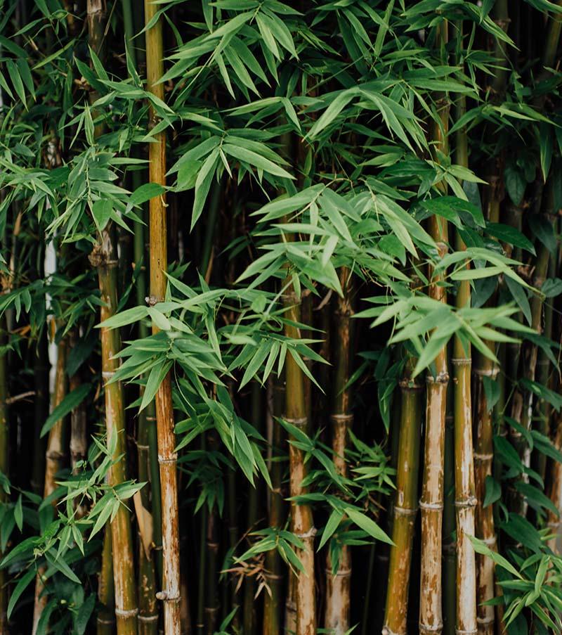 bambus-vrtni-centar-iva_01_1