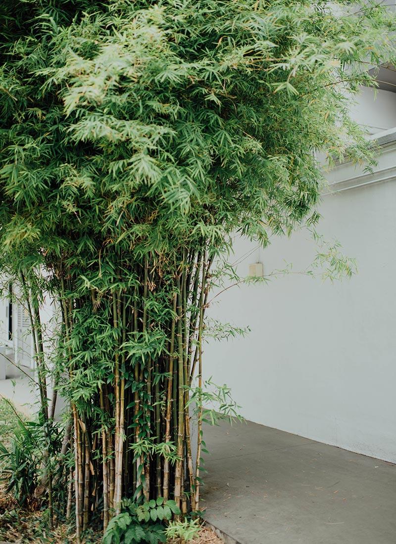 bambus-vrtni-centar-iva_02
