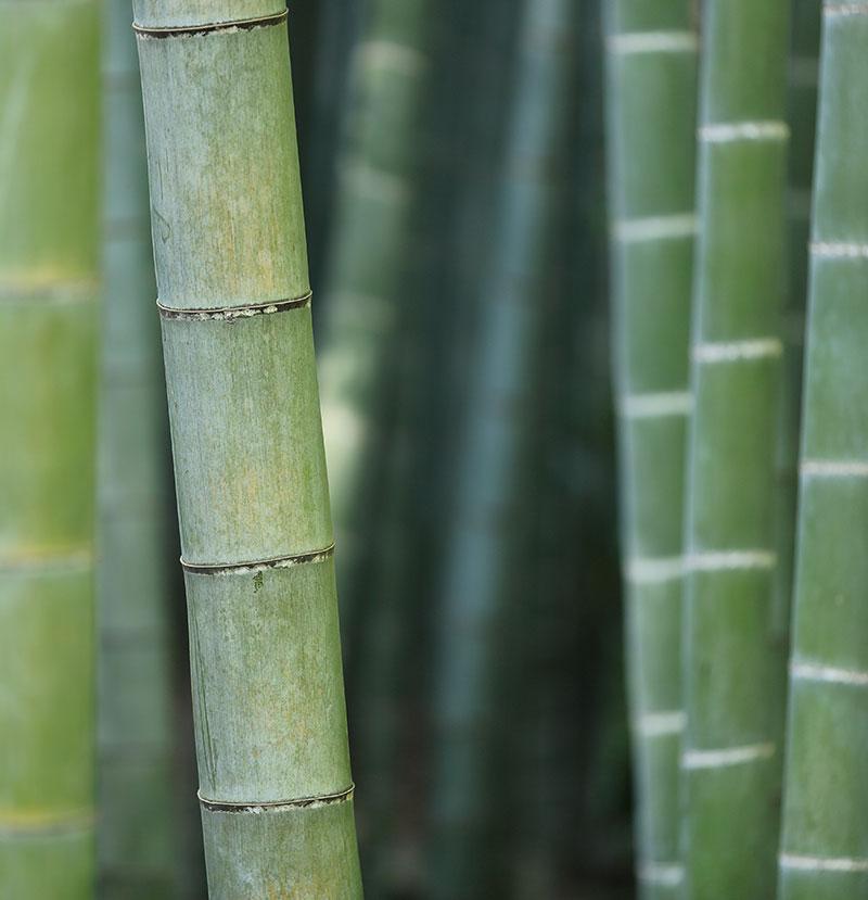 bambus-vrtni-centar-iva_03