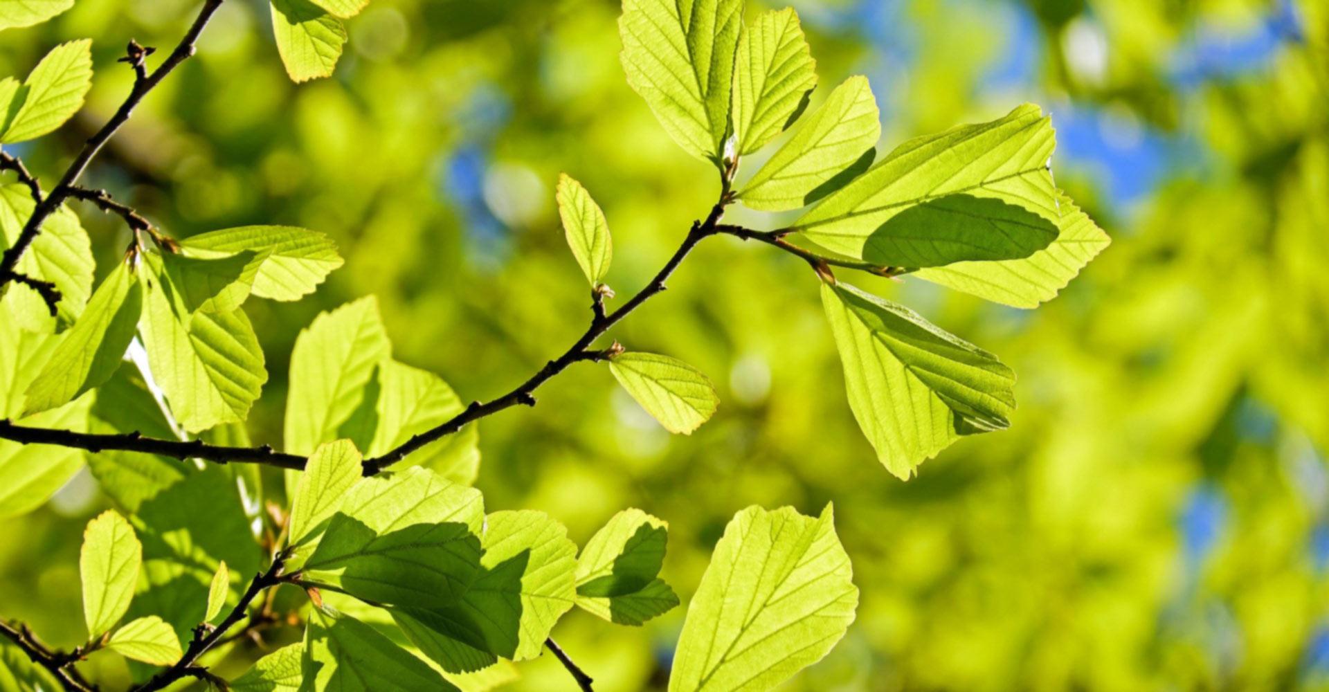 u-rano-proljece-sadi-se-drvece-55