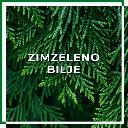 kategorija_zimzeleno_bilje1
