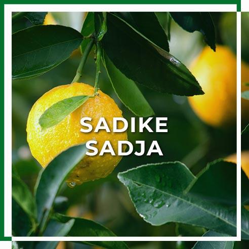 sadike_sadja
