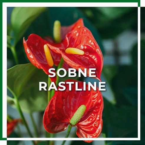 sobne_rastline