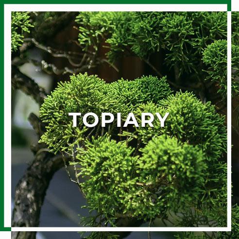 tiopiary